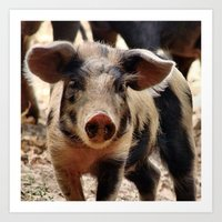 piglet Art Prints featuring Young Piglet by MehrFarbeimLeben