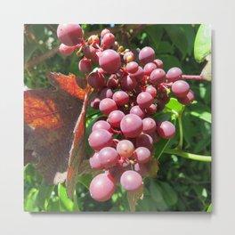 Red Grape 4 Metal Print
