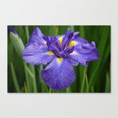 Purple Iris Flower Canvas Print