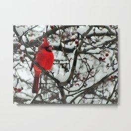 Northern Cardinal, winter Metal Print