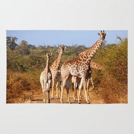 Giraffes in South Africa, wildlife Rug