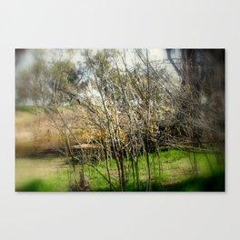 Brushwood Canvas Print