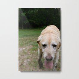 Good Dog. Metal Print