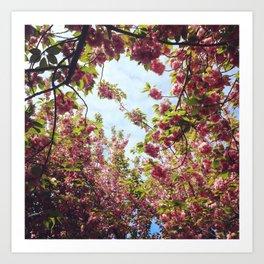 Cherry Blossom Delight 2 Art Print