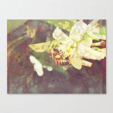 Honey Bee: Pearl Canvas Print