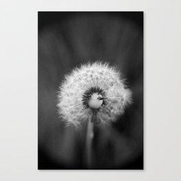 dandelion 2 Canvas Print
