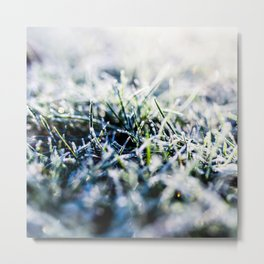 Frosty Morning 1 Metal Print
