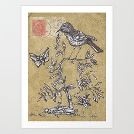 Vintage Birds and Bugs Art Print
