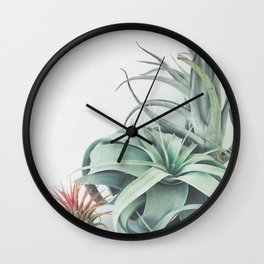 Air Plant Collection Wall Clock