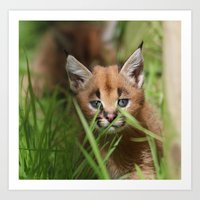 caracal kitten Art Print