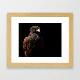 Harris Hawk | Hawks | Raptor | Wildlife Photography Framed Art Print