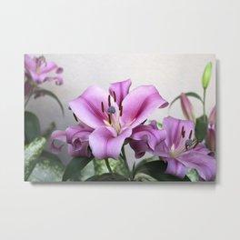 Longwood Gardens Orchid Extravaganza 3 Metal Print