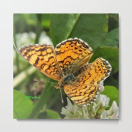 A Mylitta Crescent Butterfly at Rest Metal Print