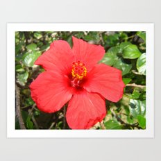 Tropical Flower Red Art Print