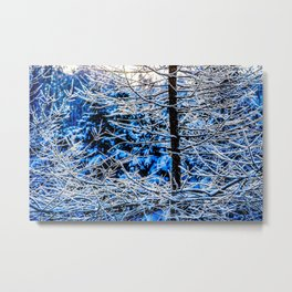Young Larix Tree In The Winter Forest At Sunset Metal Print