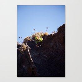 Succulent Cliff Canvas Print