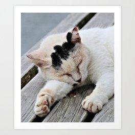 Cat Dreaming Art Print