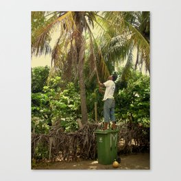 Getting Coconuts Canvas Print