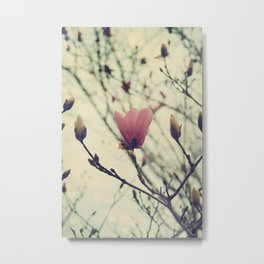 An Early Spring, Branches in bloom and bud Metal Print
