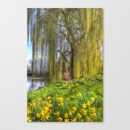 Daffodils and Willow Tree Canvas Print