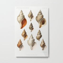 Molluscs of the Northern Seas from Resultats des Campagnes Scientifiques by Albert I Prince of Monaco (1848-1922) Metal Print