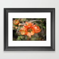 Orange Blossoms Framed Art Print