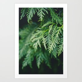 Christmas Green Art Print