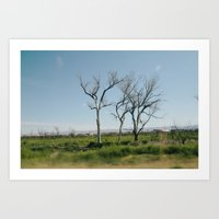 Trees from the car Art Print