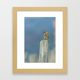 Passerotto-young sparrow Framed Art Print