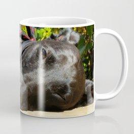 Lazy Lurcher Coffee Mug