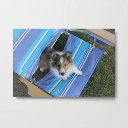 Summer Puppy Metal Print