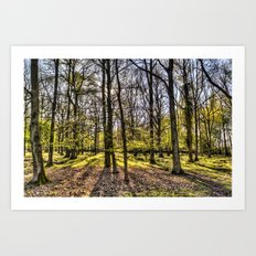 The Evening Forest Art Print