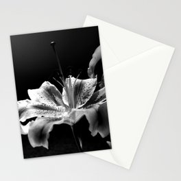 Lily in Black & White Stationery Cards