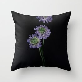 Scabiosa Trio Floral Still Life Throw Pillow