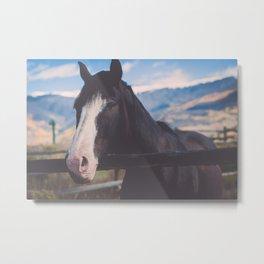 Horse in Colorado Pasture Metal Print