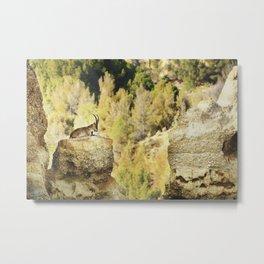 """Wildlife at the Bad lands. Mountain goat"" Metal Print"