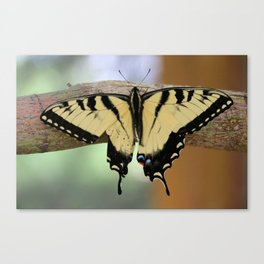 Le Papillon - Papilio Glaucus Canvas Print