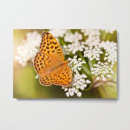 Argynnis paphia butterfly beauty Metal Print