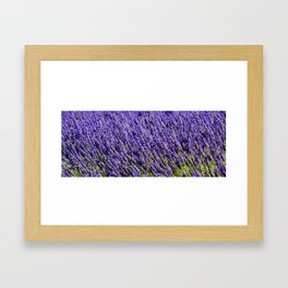 Lavender Fields III Framed Art Print