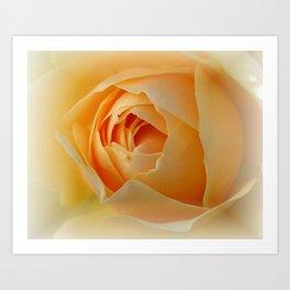 Yellow Graham Thomas Rose Art Print