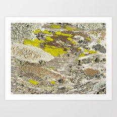 Lichens Over Bark 2 Art Print