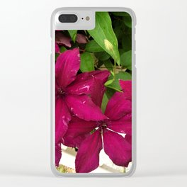 Rouge Cardinal Clematis Clear iPhone Case