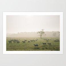 Sunrise burning through heavy fog over field of grazing sheep. Norfolk, UK. Art Print