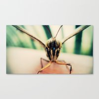 moth Canvas Prints featuring moth by Sookie Endo