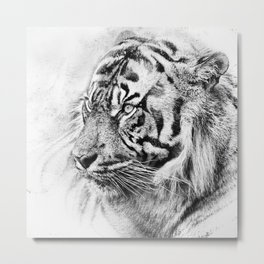 The mysterious eye of the tiger. WB. Square Metal Print