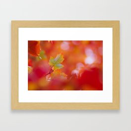 Green in a Sea of Red Framed Art Print