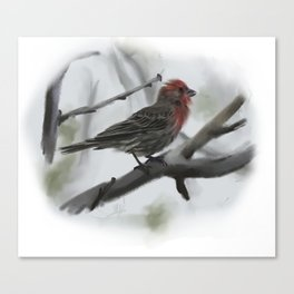 House Finch Canvas Print