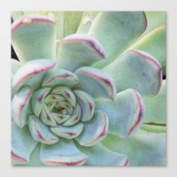 succulent Canvas Prints featuring Succulent by Tammy Franck