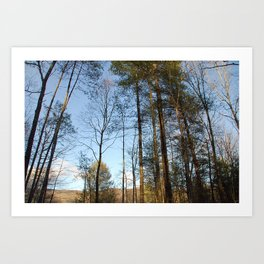 Wind Through The Trees Art Print