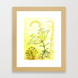 Tansy and Great mullein Framed Art Print